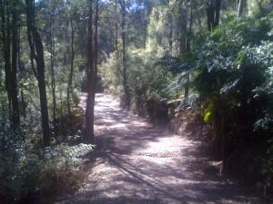 Fire Trail Berowra