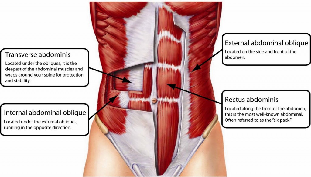 Abdominals Core Anatomy Explained